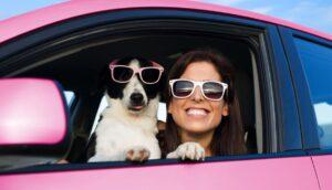 perro en auto 4